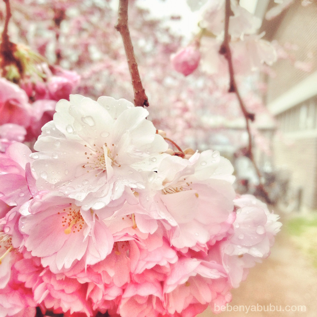 Under the Sakura tree | { a Memory Bliss }