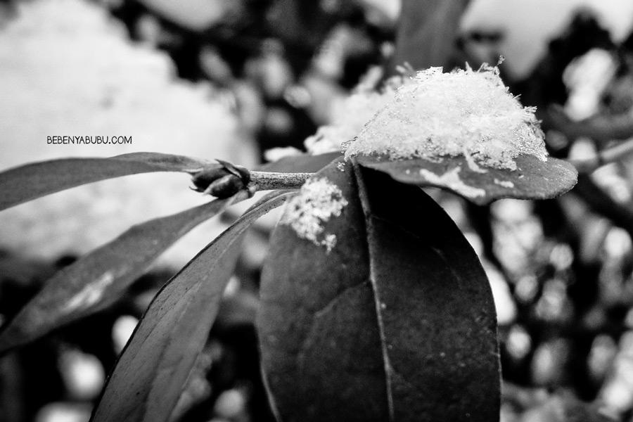 snowcity5